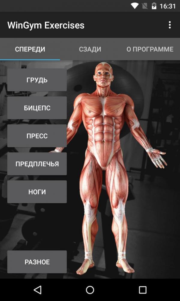 WinGym Exercises - добиваемся эффективности в прокачке