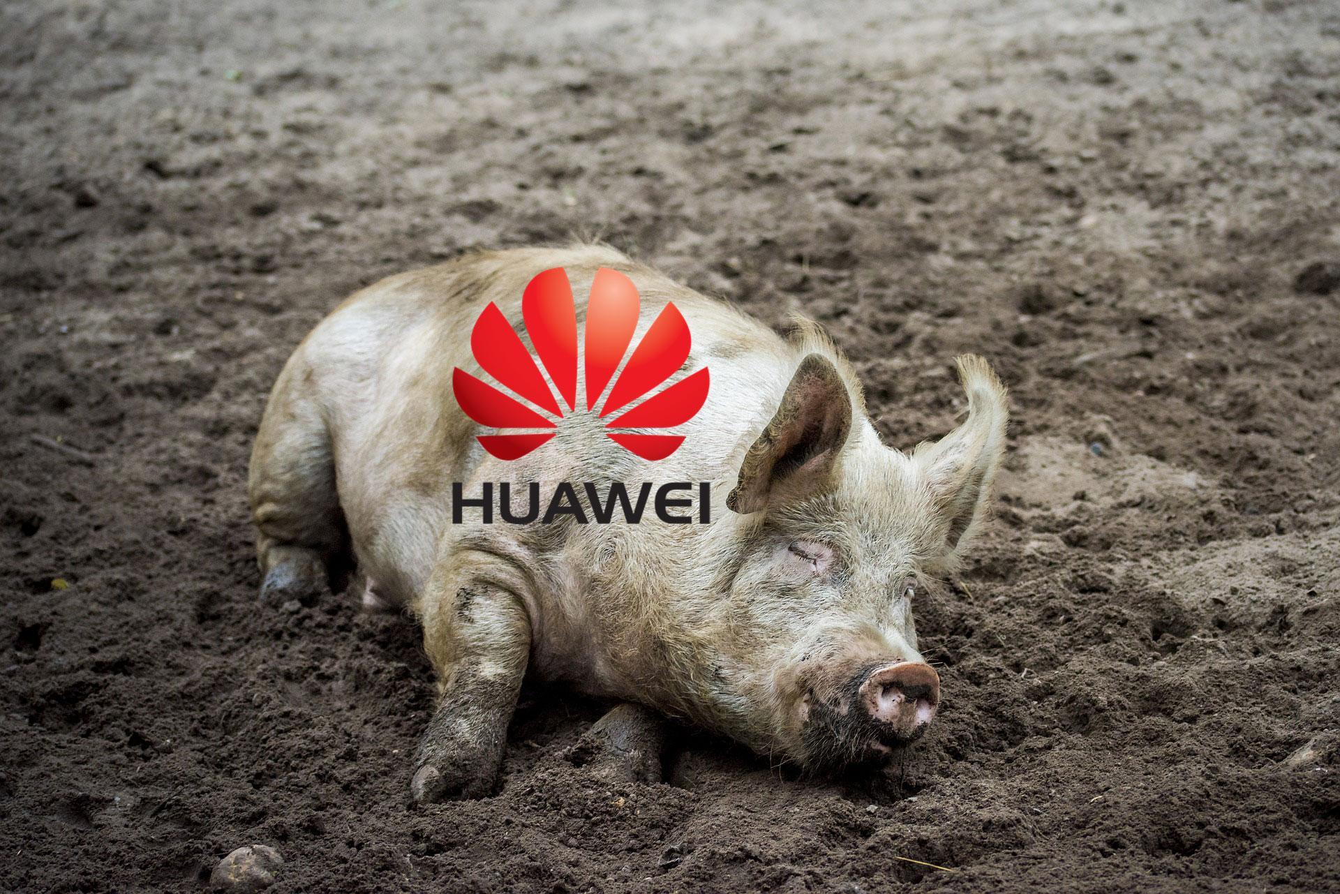 Huawei и свинофермы. Что у них общего?